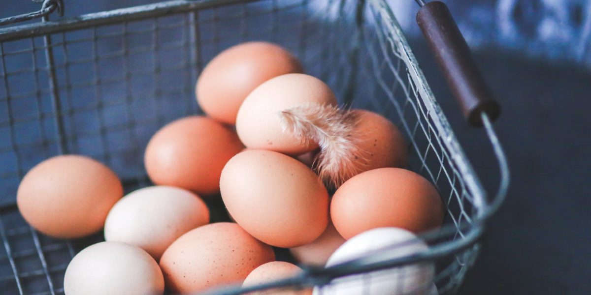 The Power of Amino Acids in the Magnificent Egg