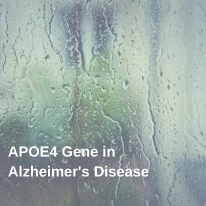 Apoe4 Gene in Alzheimer's Disease