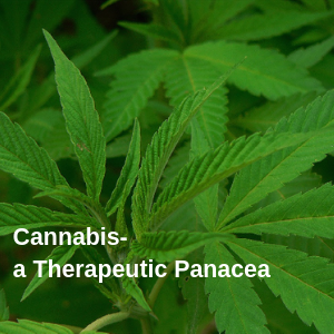 Cannabis a therapeutic panacea